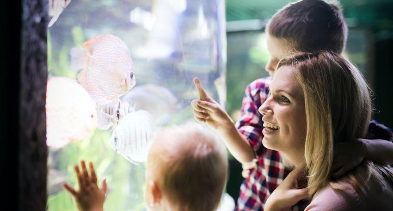 destilliertes Wasser Aquarium